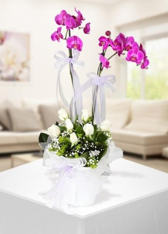 çerkezköy çiçek siparişi Fuşya Orkide Aranjmanı