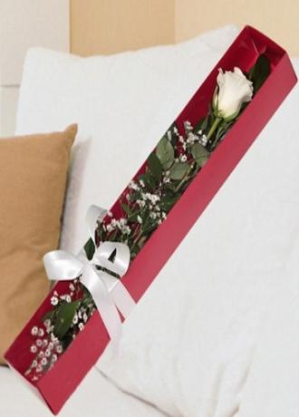 çerkezköy çiçek siparişi Kutuda Tek Beyaz Gül