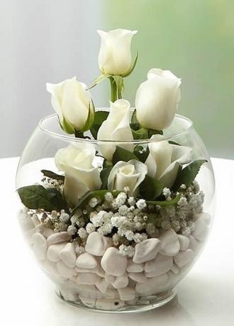 çerkezköy çiçek siparişi Beyaz Gül Şefaf Kürede