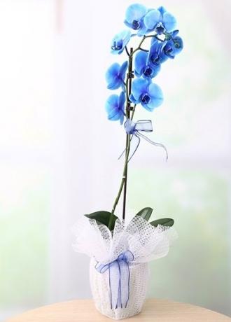 çerkezköy çiçek siparişi Tek Dal Mavi Orkide