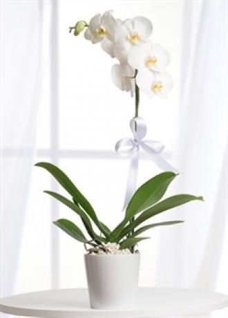 çerkezköy çiçek siparişi Tek Dal Beyaz Orkide
