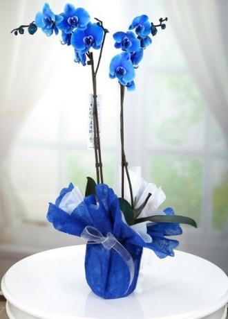 çerkezköy çiçek siparişi Çift Dal Orkide